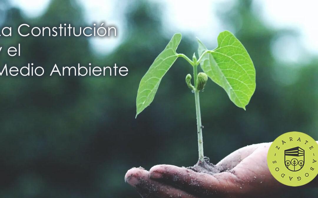 Esto es lo que dice nuestra Constitución sobre el Medio Ambiente (Art.4)